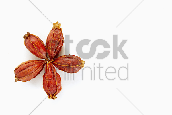 traditional chinese herb cape jasmine fruit stock photo
