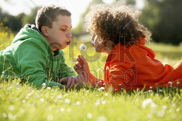 two boys lying on the grass blowing dandelion stock photo