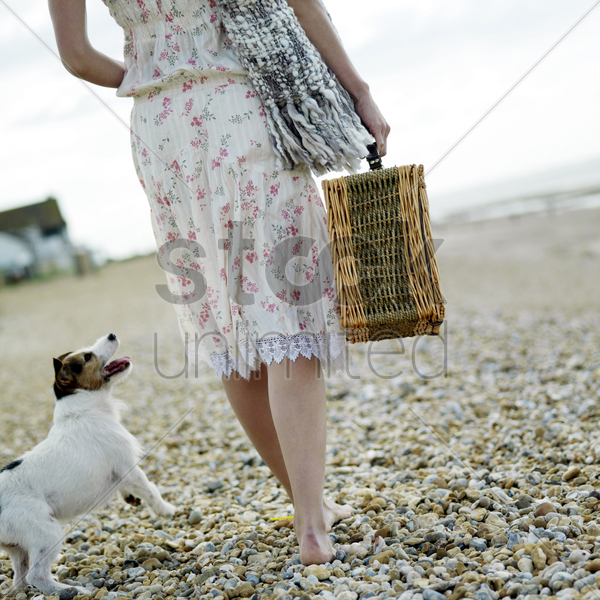 woman carrying picnic basket with dog following from behind stock photo