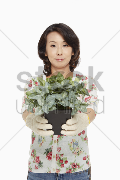 woman holding up a potted plant stock photo