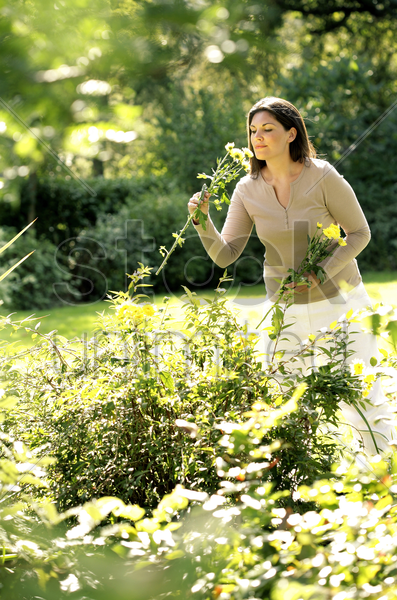woman picking flowers stock photo