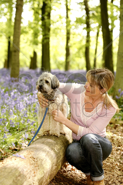 woman playing with her dog stock photo