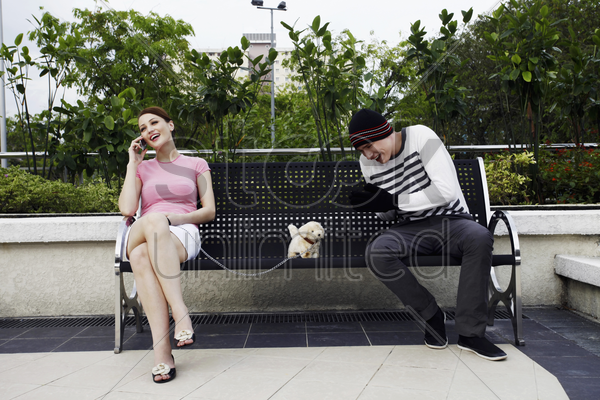 woman talking on the mobile phone, man trying to steal her dog stock photo