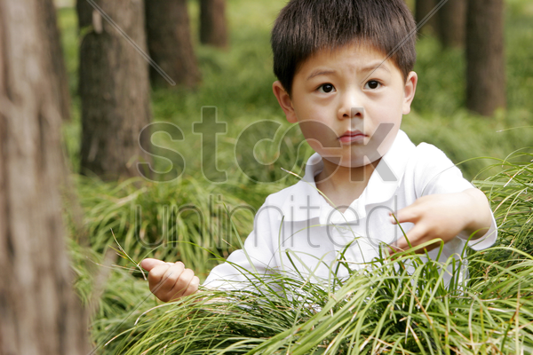 young boy playing with the bushes stock photo