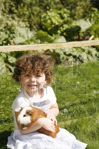 young girl hugging a guinea pig stock photo
