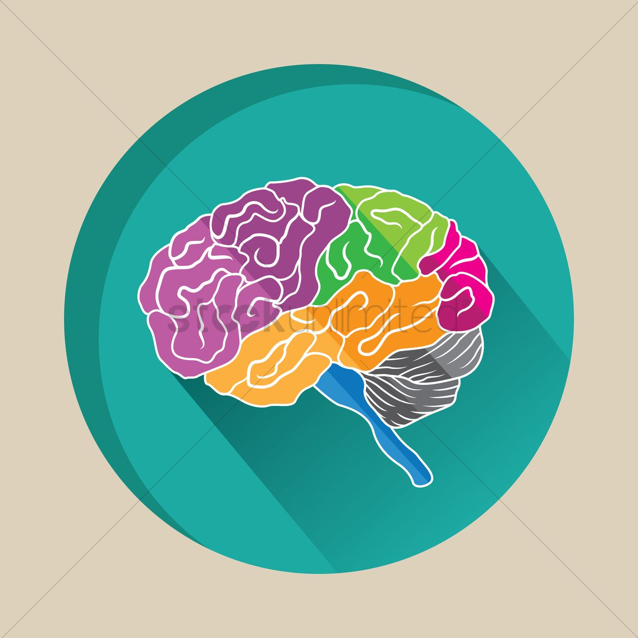 colorful human brain vector image 1255306 stockunlimited