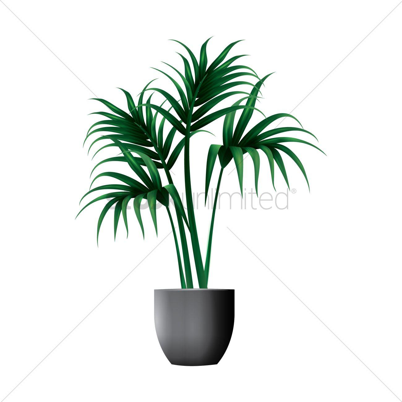 Kentia palm plant vector image 1944209 stockunlimited for Kentia pianta
