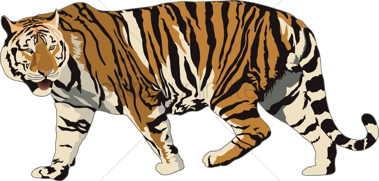 the characteristics of the tiger a feline carnivore species The jaguar is the third largest feline after the tiger and the jaguar characteristics parts of their range by creatures not of their own species.