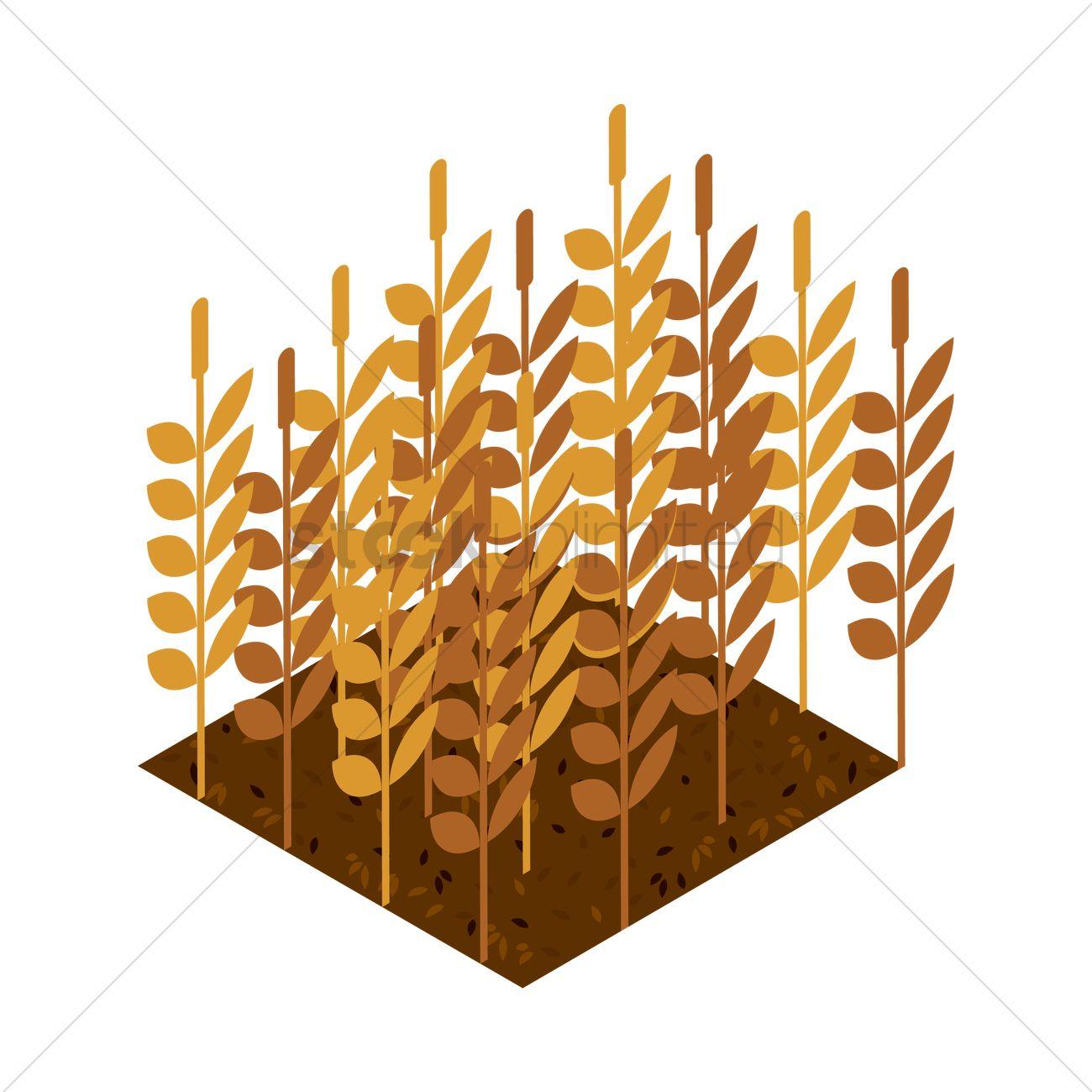 Wheat stalks Vector Im...